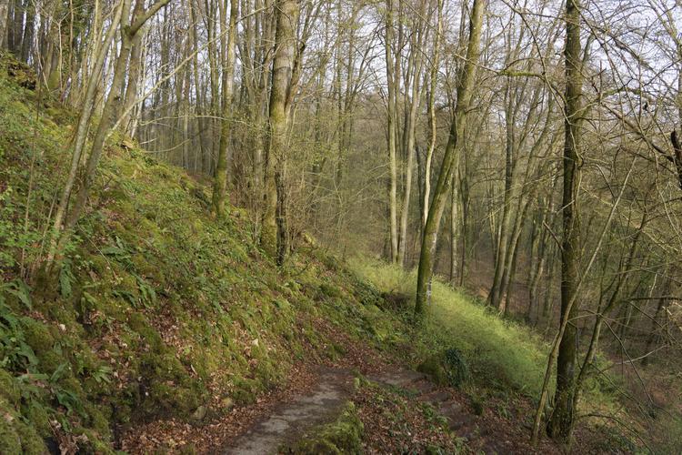 Mullerthal Hiking